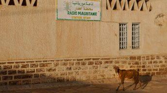 Goat at Radio Mauritanie in Atar - Mauritania