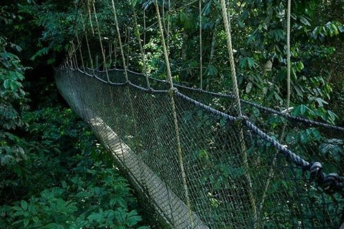 Rope Bridge into the Forest