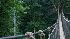 Rope Bridge over Rainforest in Kakum National Park - Ghana