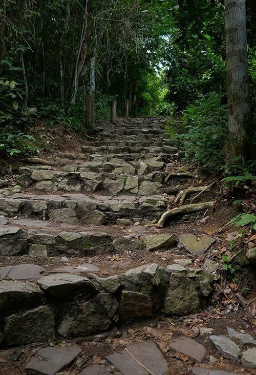 Rough stone steps up through Kakum's rainforest