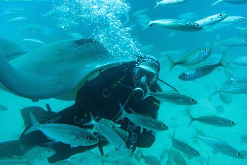 Diver amidst fish and manta ray