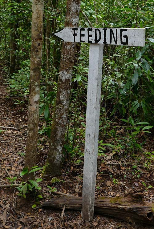 Arrow-shaped Feeding Sign at Camp Leakey