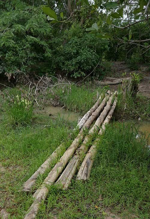 Bamboo Bridge in Rough Terrain during the walking safari in Mole National Park