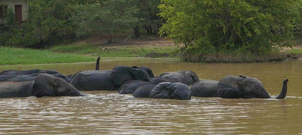 He Could See These Elephants at the Watering Hole on our Ghana Safari at Mole National Park