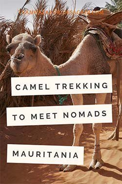 Pin for Camel Trek in Mauritania - image shows camel at oasis