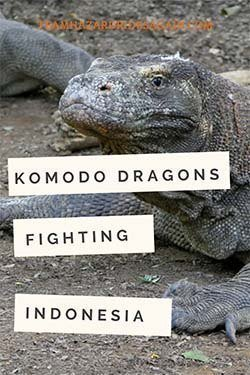 Pin for Komodo Dragons - Fight! - image shows a Komodo Dragon
