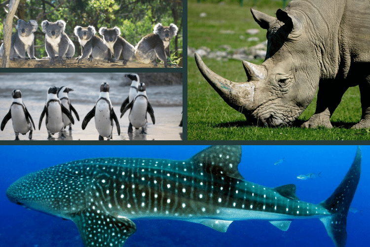 Wildlife 3d Virtual Tours and WebCams - rhino, koala, whale shark, penguin