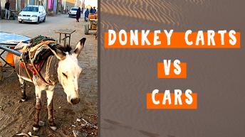 As Many Donkey Carts as Cars in Atar Mauritania
