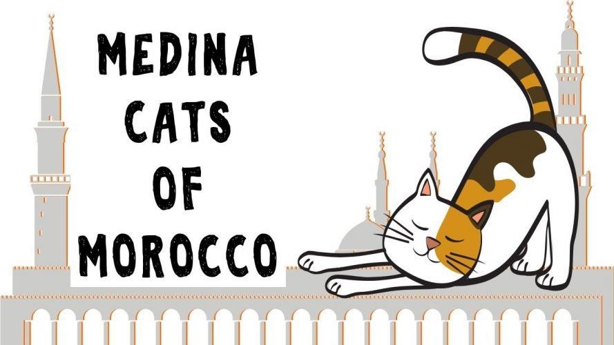 Medina Cats of Morocco Fes, Marrakech, Chefchaouen, Essaouira and Rabat