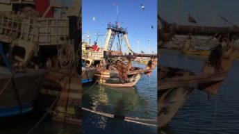 Bringing in the Catch - Essaouira Harbor, Morocco