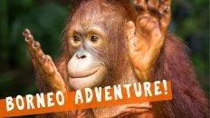 Orangutans Everywhere! Houseboat Tour in Borneo aka Kalimantan, Indonesia