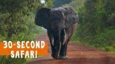 30-Second Safari in Mole National Park, Ghana
